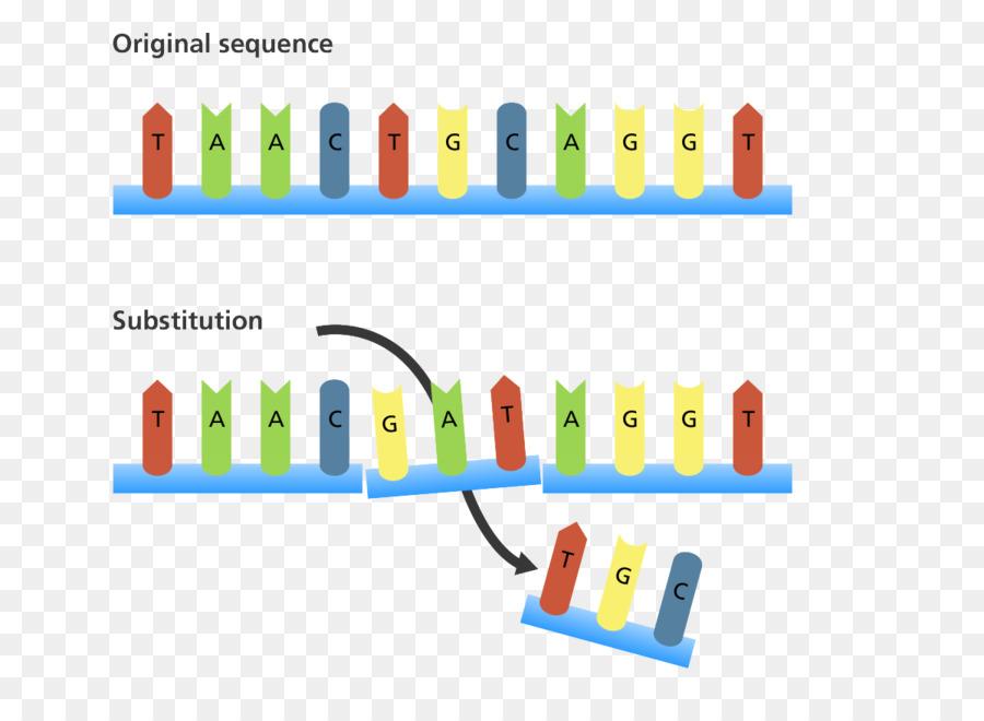 Frameshift mutation Insertion Point mutation Genetics - others png ...