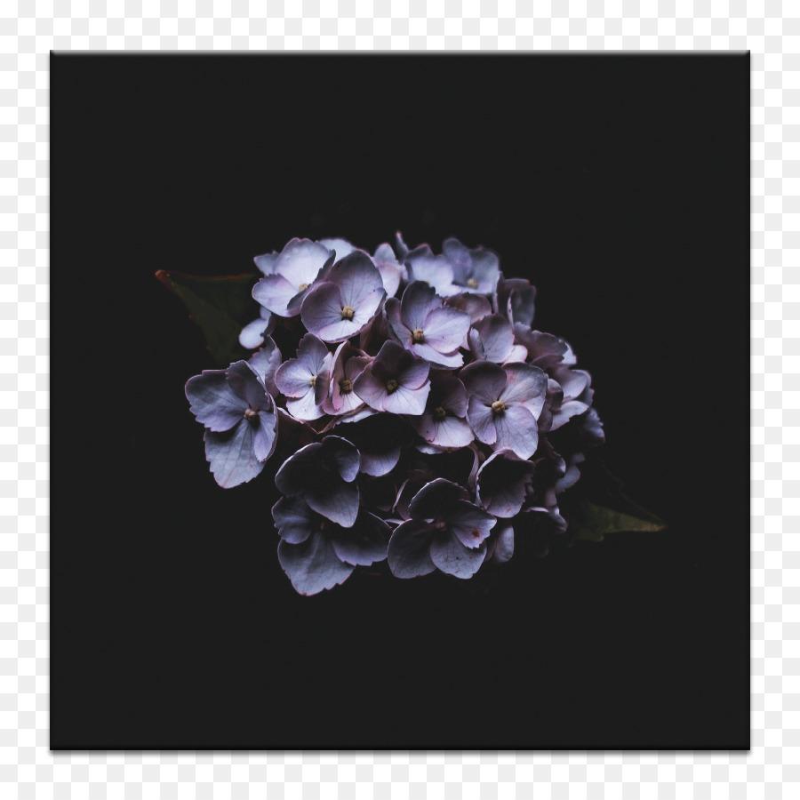 Iphone X French Hydrangea Desktop Wallpaper Photograph Flower