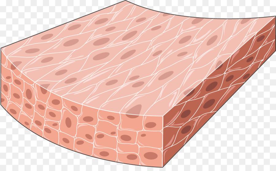 Middle cerebral artery Posterior cerebral artery Human body ...