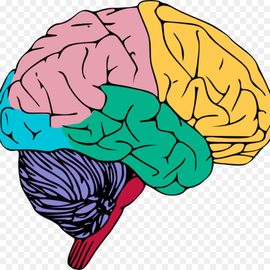 clip art brain openclipart free content image brain png download rh kisspng com brain clipart happy brain clip art for kids