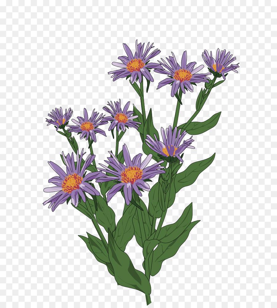 Clip art aster pyrenaeus daisy family flower drawing flower png clip art aster pyrenaeus daisy family flower drawing flower izmirmasajfo