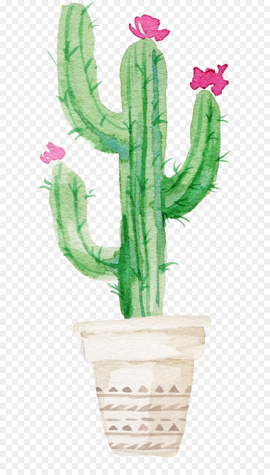 cactus y suculentas cactus y suculentas cactus pintura a