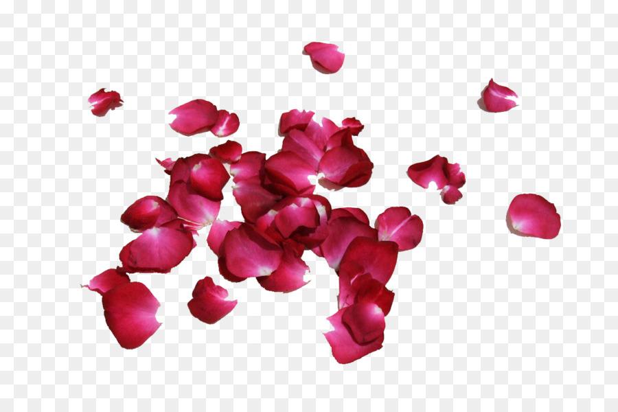 Petal Rose Flower Image Red Rose Png Download 750600 Free