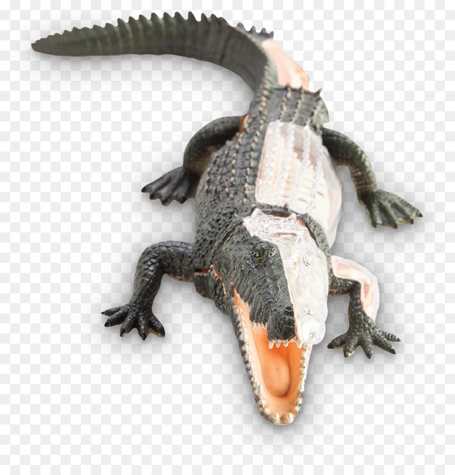 Nile crocodile Crocodiles American alligator Anatomy - crocodile png ...