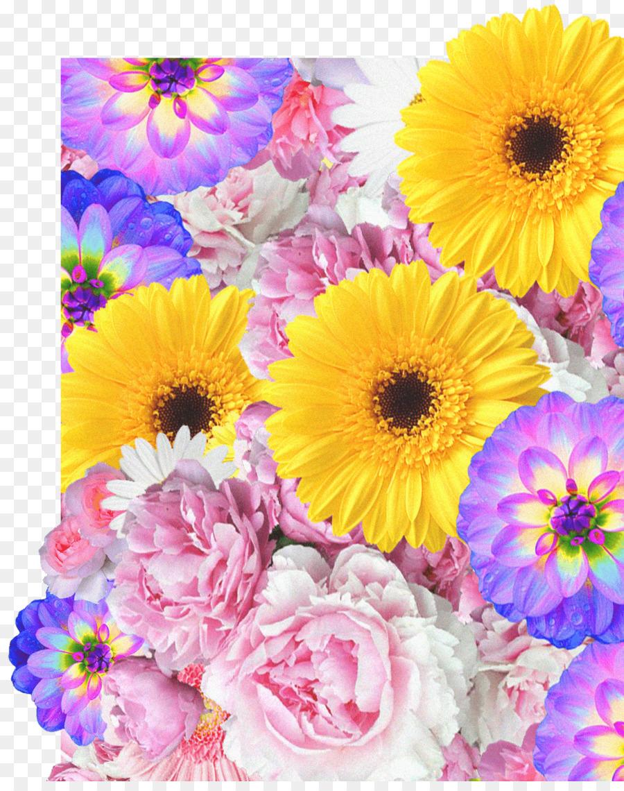 Transvaal daisy cut flowers floral design flower bouquet flower transvaal daisy cut flowers floral design flower bouquet flower izmirmasajfo