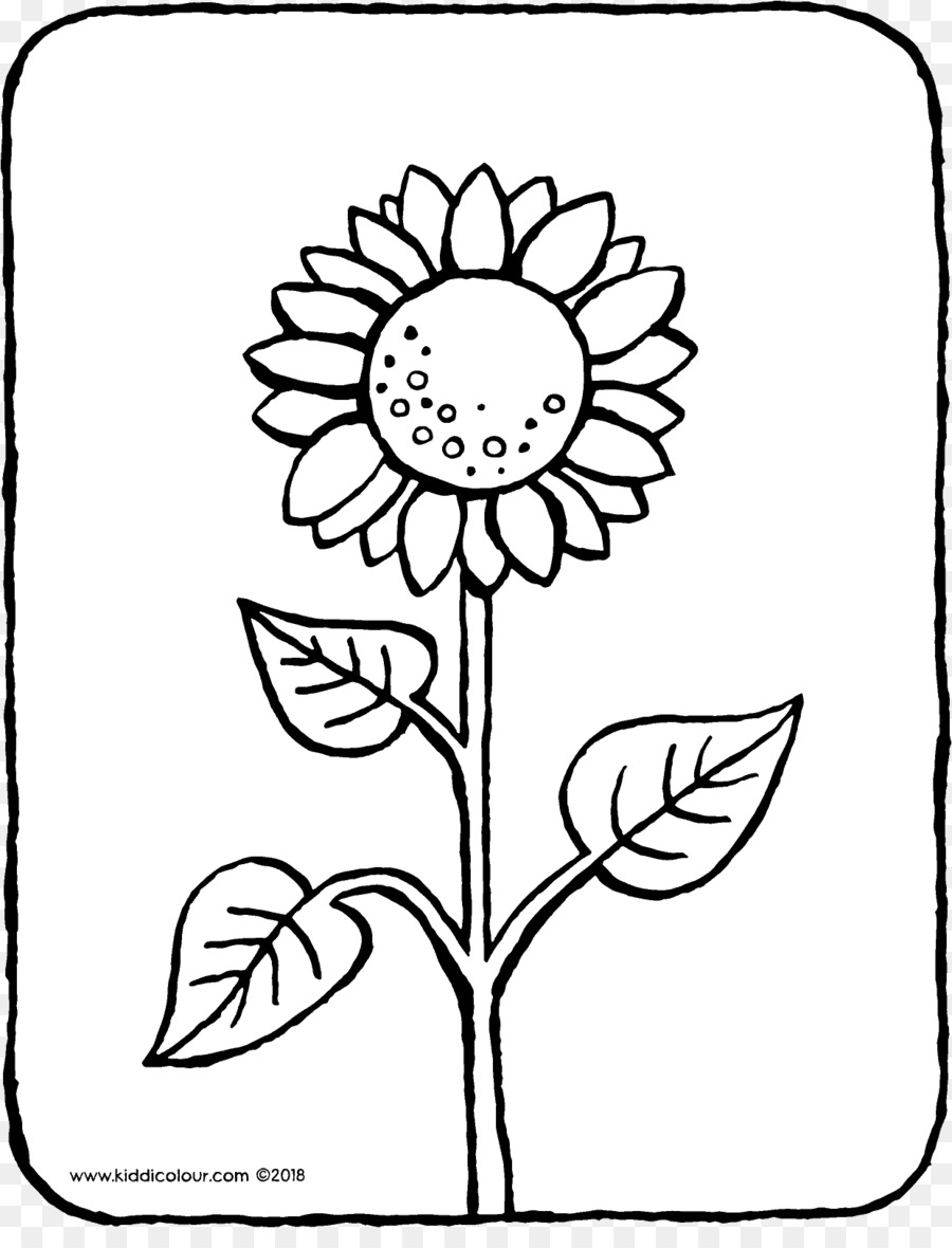 Common sunflower Coloring book Colouring Pages Ausmalbild Drawing ...