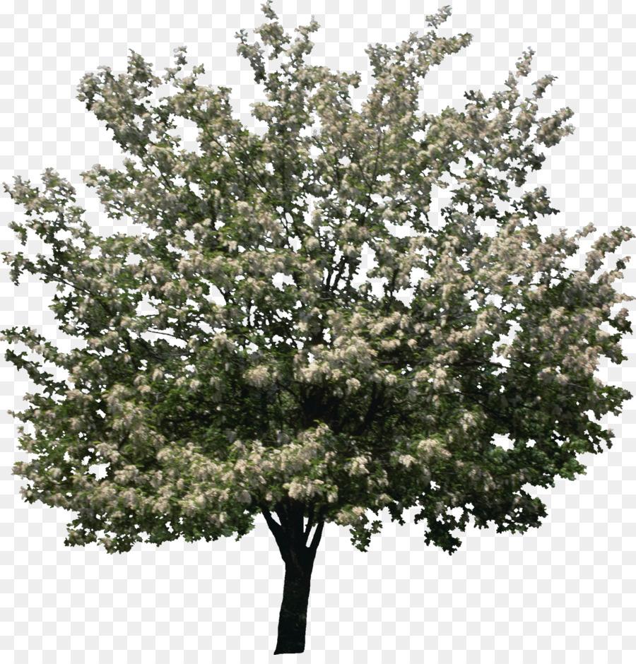 bushes png png download - 1420*1462 - Free Transparent Shrub png