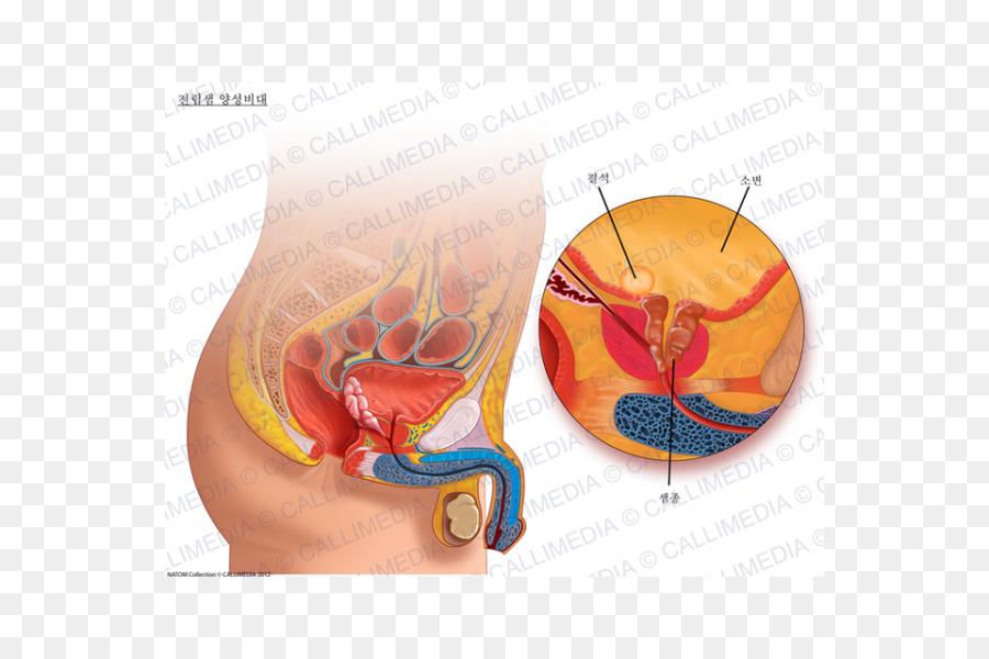 Triple penetration in vagina