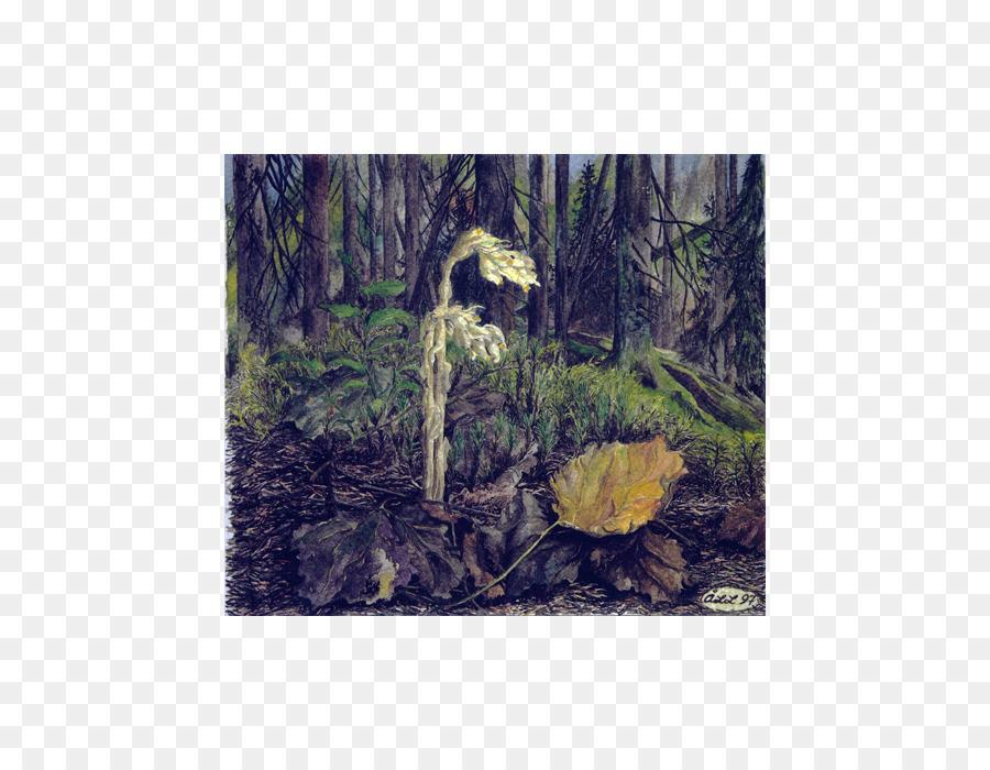 Post Cards SKIMRAGÅRDEN Rainforest Biome - hemming png download ...
