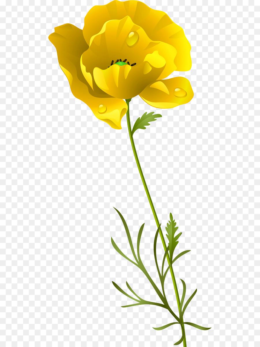 Cut flowers opium poppy petal poppies png download 5661200 cut flowers opium poppy petal poppies mightylinksfo