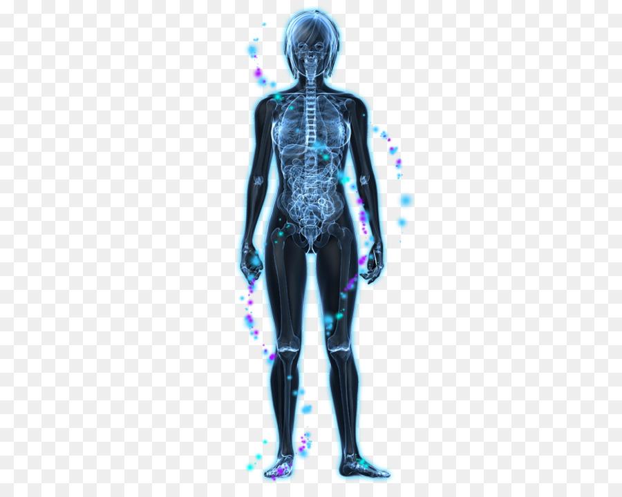 Vagus Nerve Parasympathetic Nervous System Autonomic Nervous System