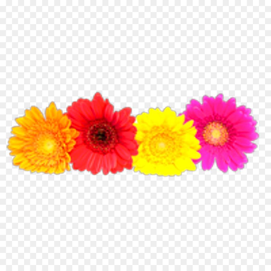 Transvaal Daisy Daisy Family Clip Art Common Daisy Stock Photography