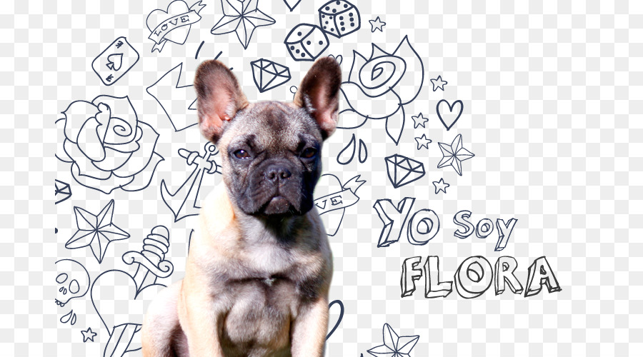 png download - 745*500 - Free Transparent French Bulldog png