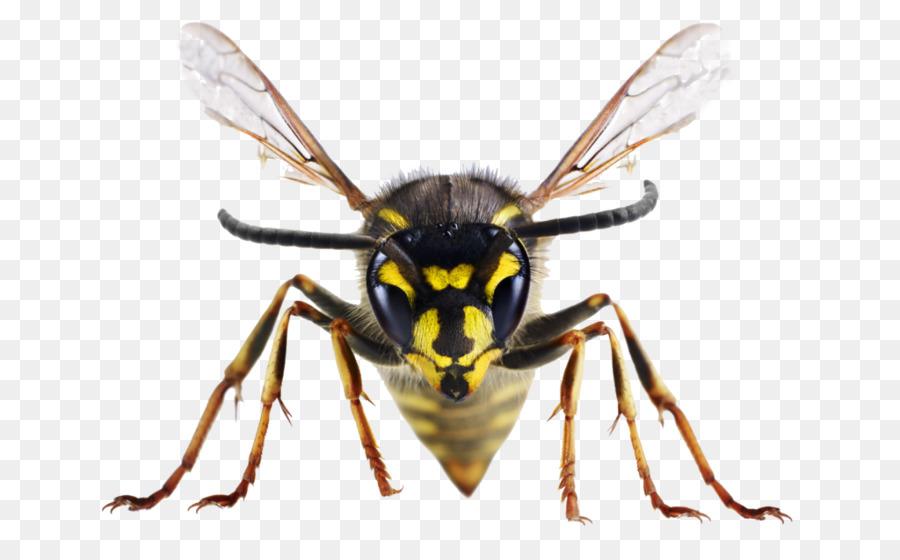 Las picaduras de insectos y picaduras de Abeja Reino Unido Avispa ...