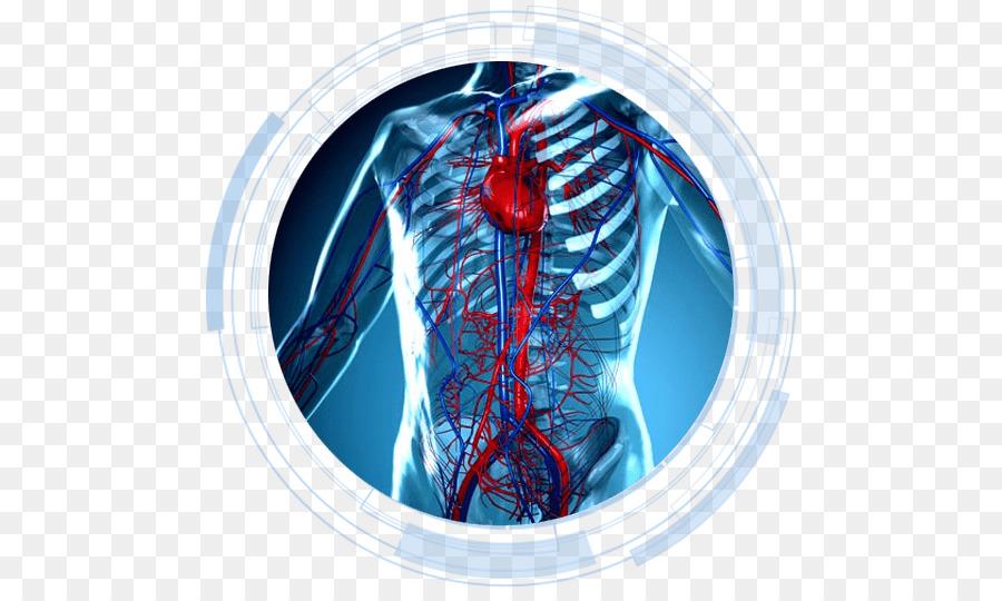 Circulatory System Heart Anatomy Human Body Cardiovascular Disease