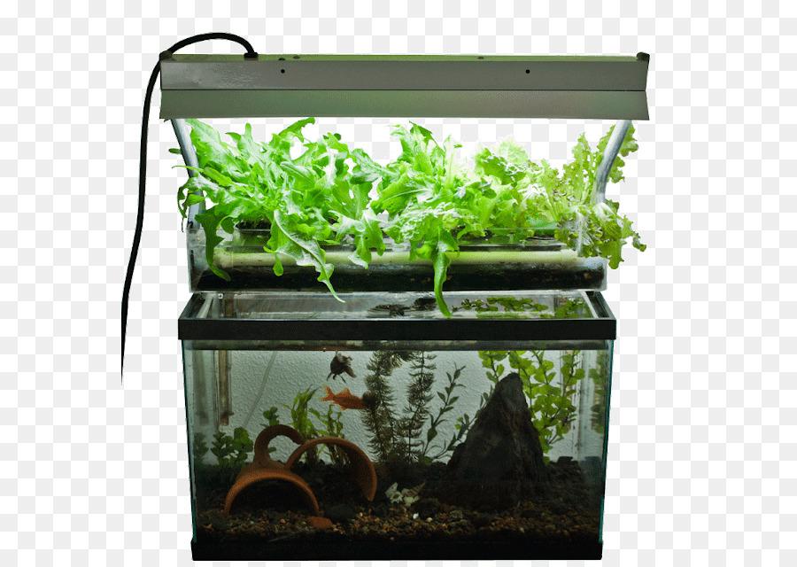 Aquaponics Plant png download - 625*640 - Free Transparent