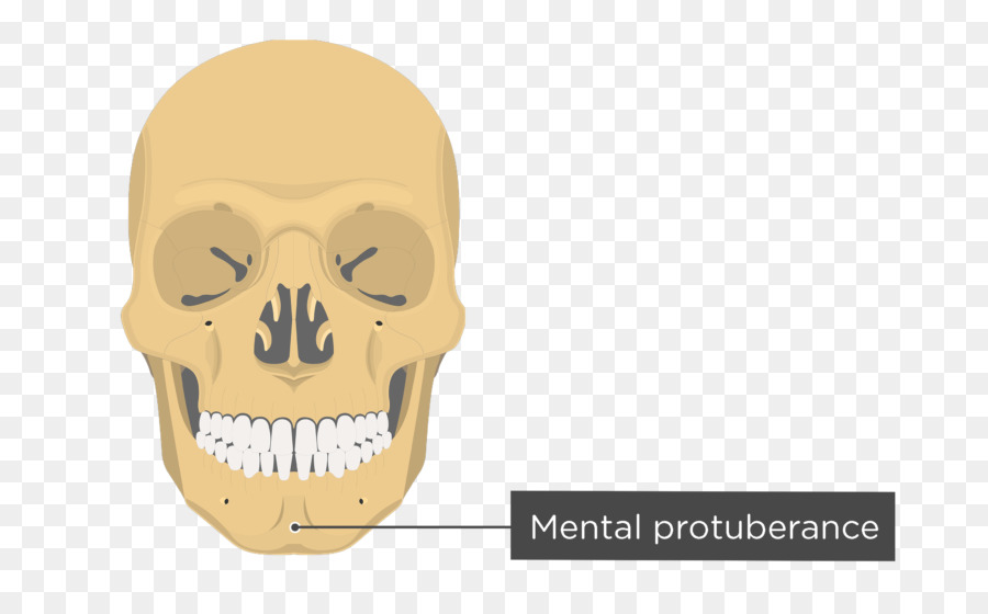 Zygomatic Process Of Temporal Bone Zygomatic Bone Frontal Bone