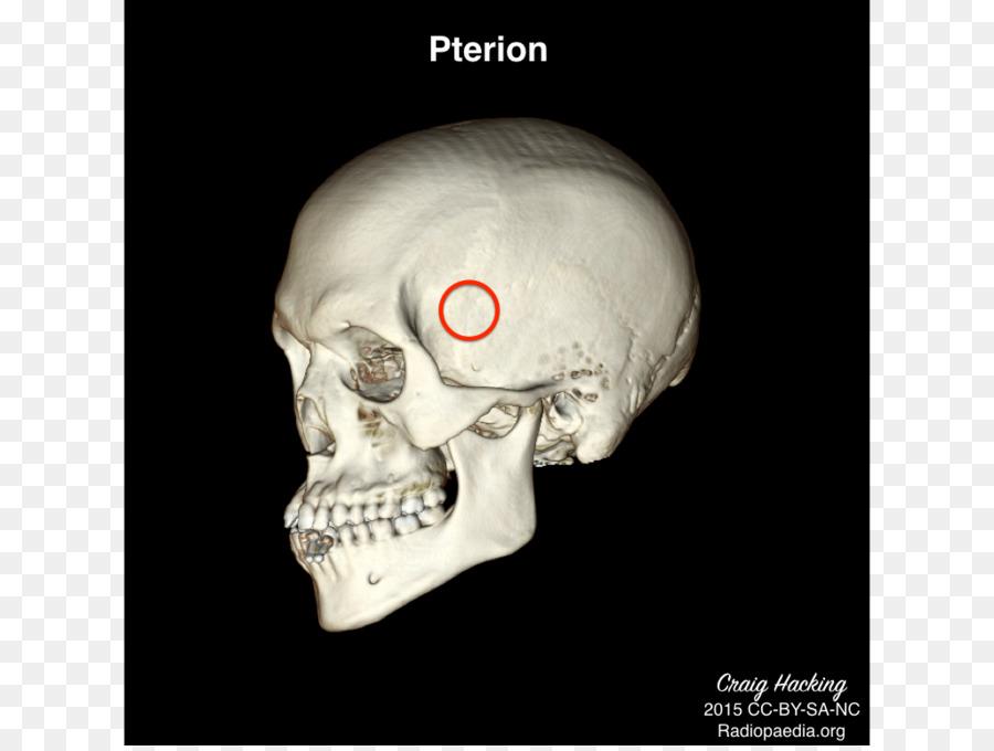 Anatomía Física, terapia Cráneo de la Salud - bien Formatos De ...