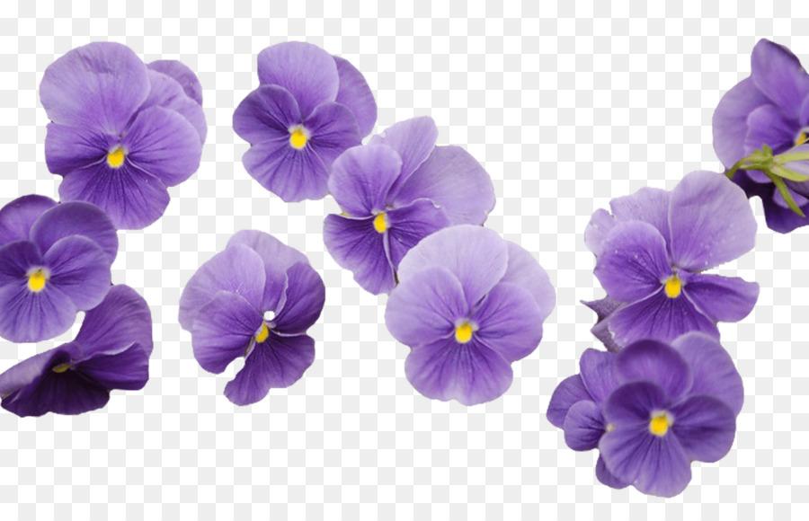 Cut flowers violet purple yellow flower png download 1368855 cut flowers violet purple yellow flower mightylinksfo