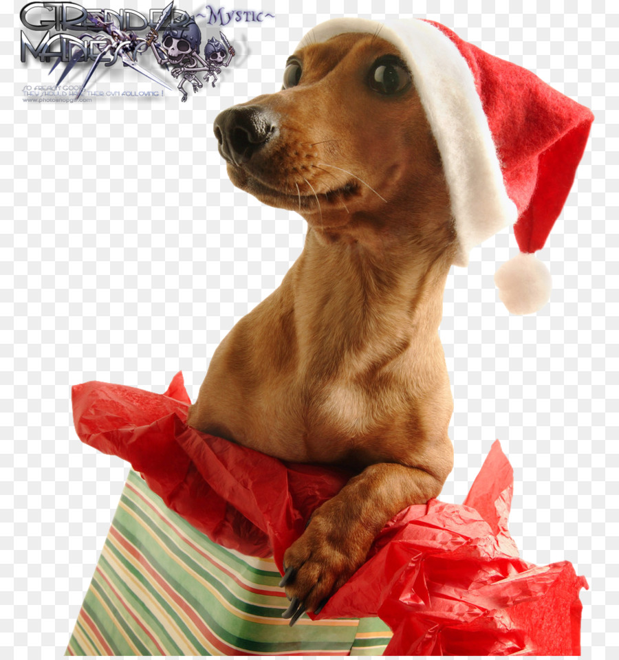 Dog christmas gifts holiday