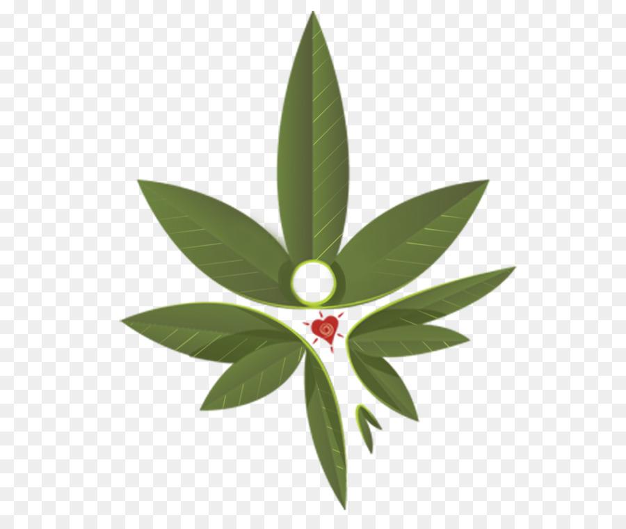 Feuille Hortus Europae Americanus La Botanique Du Cannabis Skunk