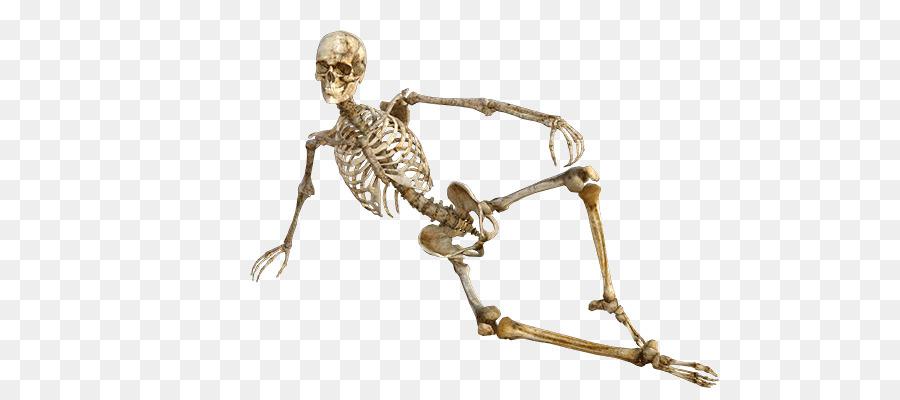 Human Body Human Skeleton Anatomy Axial Skeleton Muscle Skeleton