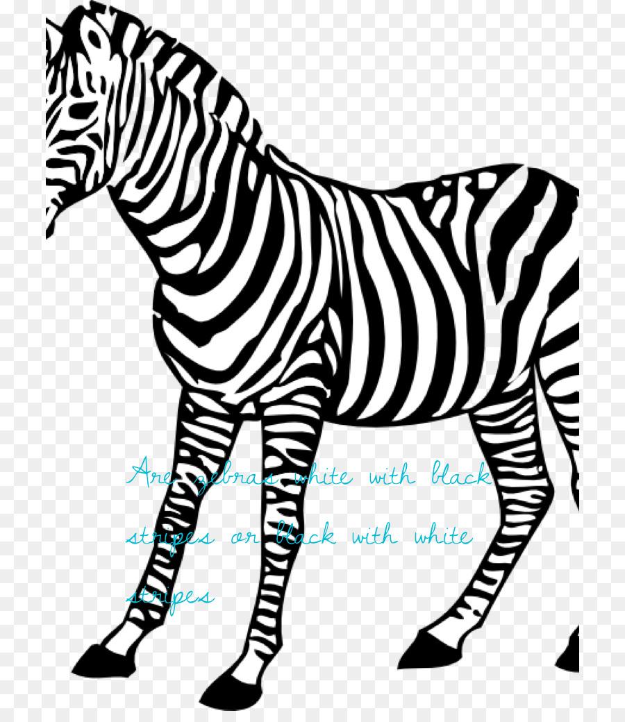 Baby Zebra Coloring book Animal - zebra png download - 768*1024 ...