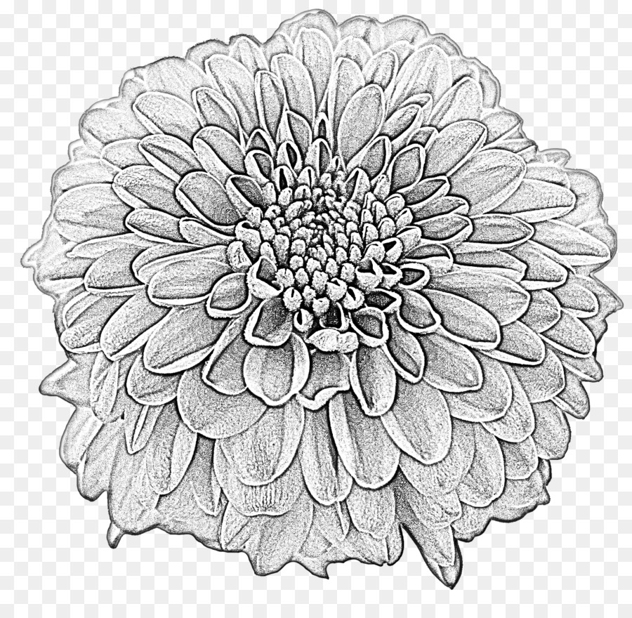 Drawing Dahlia Flower Clip Art Image Flower Png Download 1280