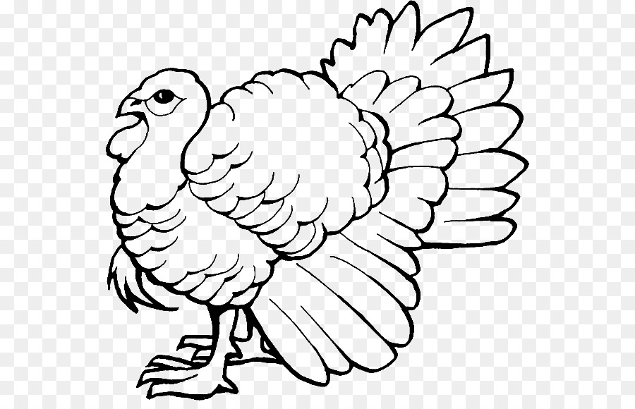 Coloring book Turkey Drawing Child - book png download - 600*568 ...