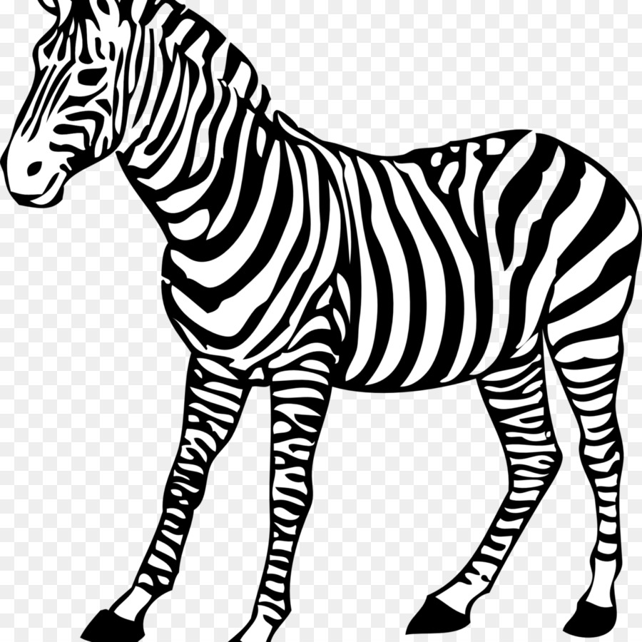 Coloring book Colouring Pages Baby Zebra Drawing - zebra png ...
