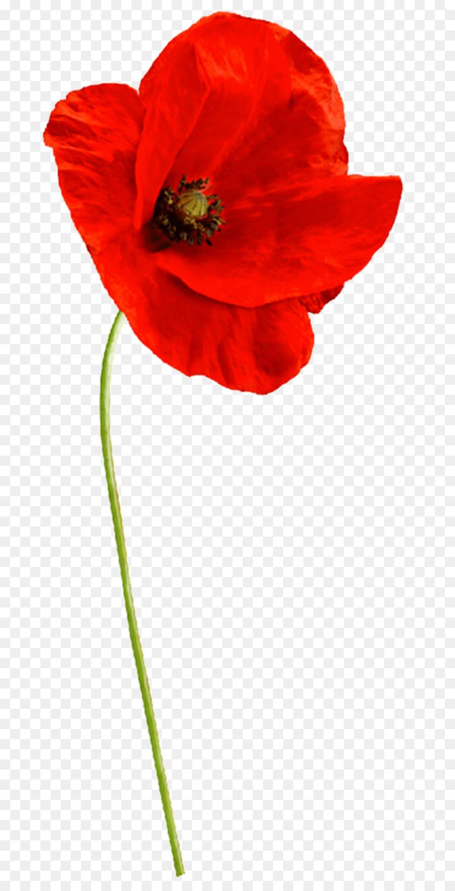 Common poppy flower garden roses sticker plant stem flower png common poppy flower garden roses sticker plant stem flower mightylinksfo