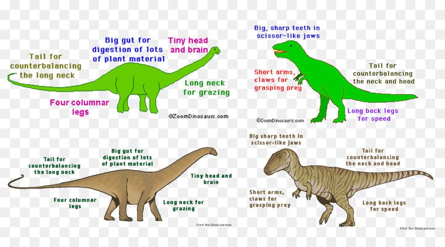 Velociraptor Tyrannosaurus Triceratops Allosaurus Apatosaurus