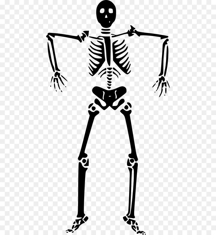 Gráficos de Vector Clip art esqueleto Humano Huesos - esqueleto png ...