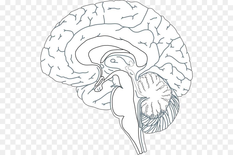 El cerebro humano Clip Art de Navidad Diagrama - cerebro Formatos De ...