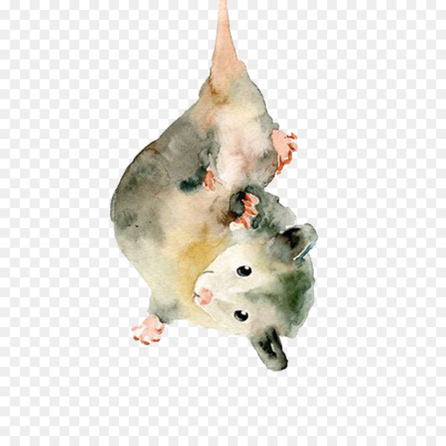 The Opossum Watercolor Painting Drawing Animal Painting Png