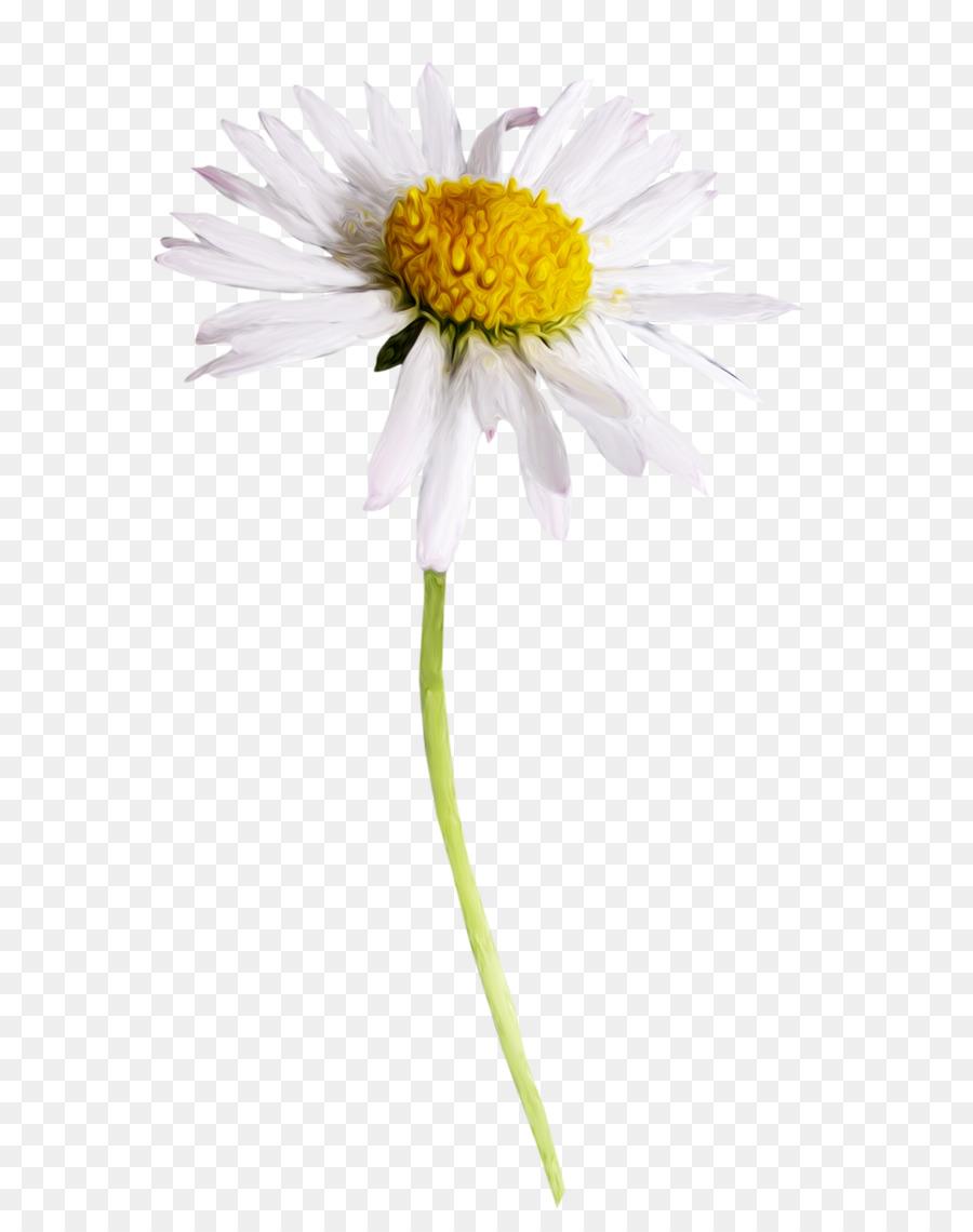 Cut Flowers Fleur Blanche Plant Stem Petal Camomile Png Download