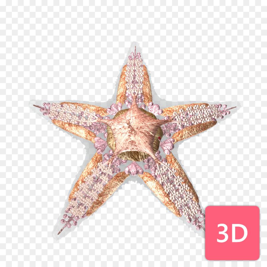 Starfish Comparative anatomy Human body Sea - starfish png download ...