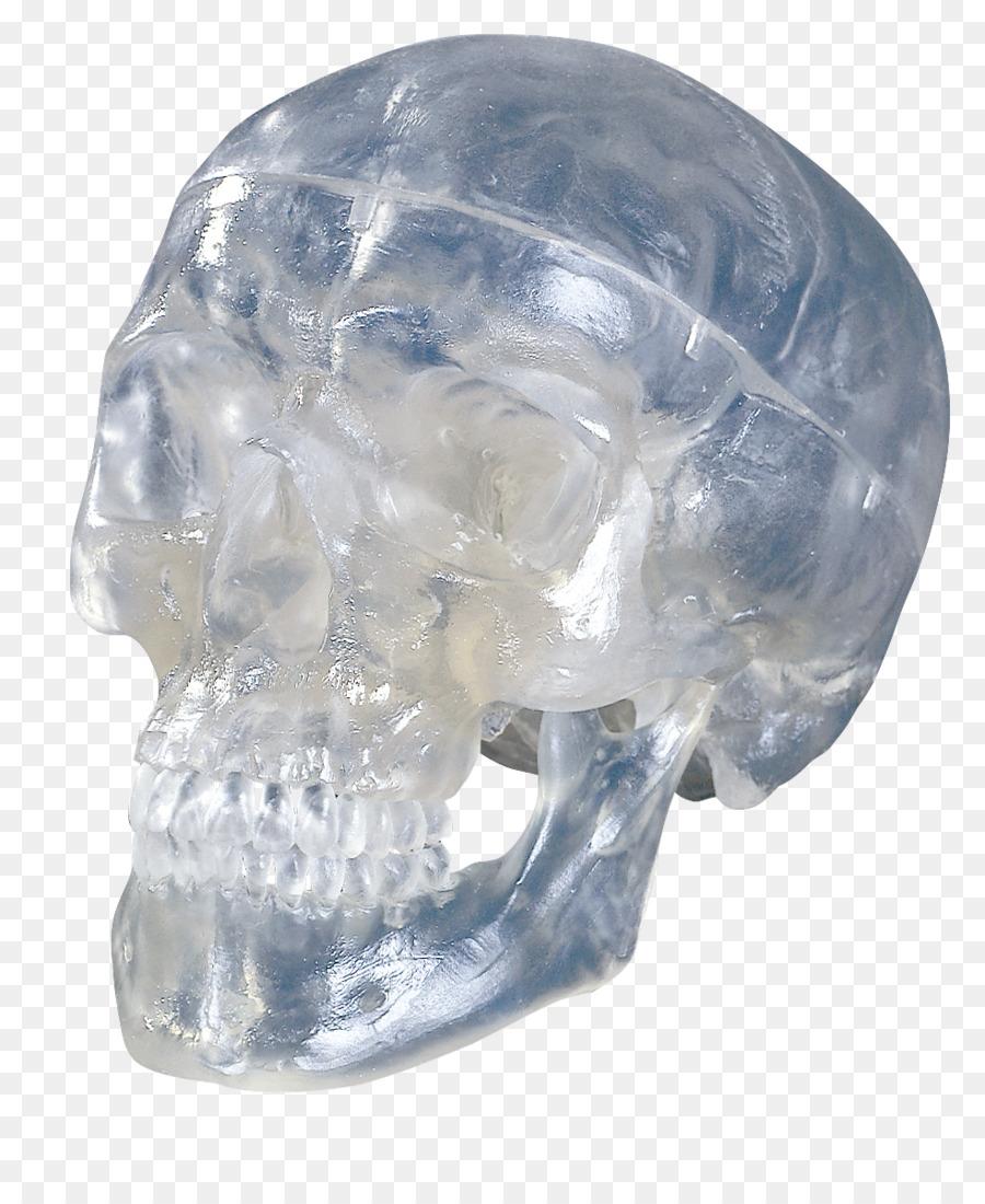 Human skull Anatomy Bone - skull png download - 983*1193 - Free ...