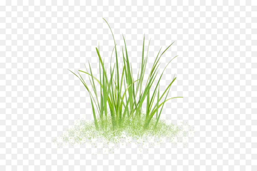 Sweet Grass Vetiver Pflanzen Stinktiere Aquarium Hohes Gras Png
