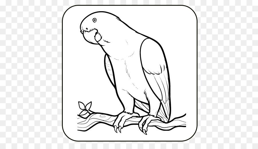Cara Menggambar Burung Gambar Gambar Mewarnai Buku Burung Unduh