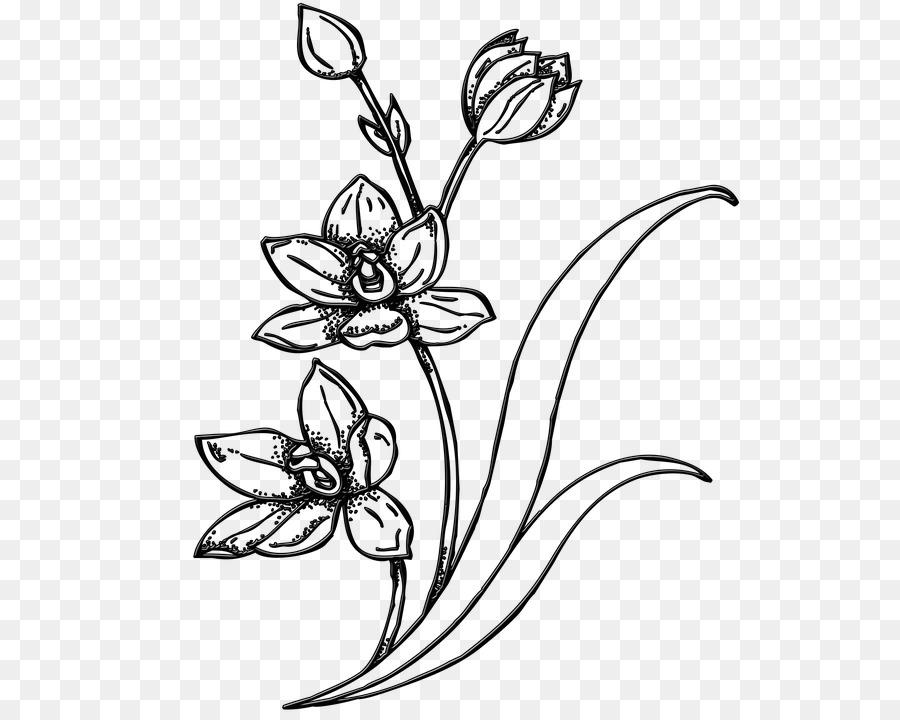 Gambar Gambar Sketsa Bunga Clip Art Unduh Flora Tanaman Sapawarga