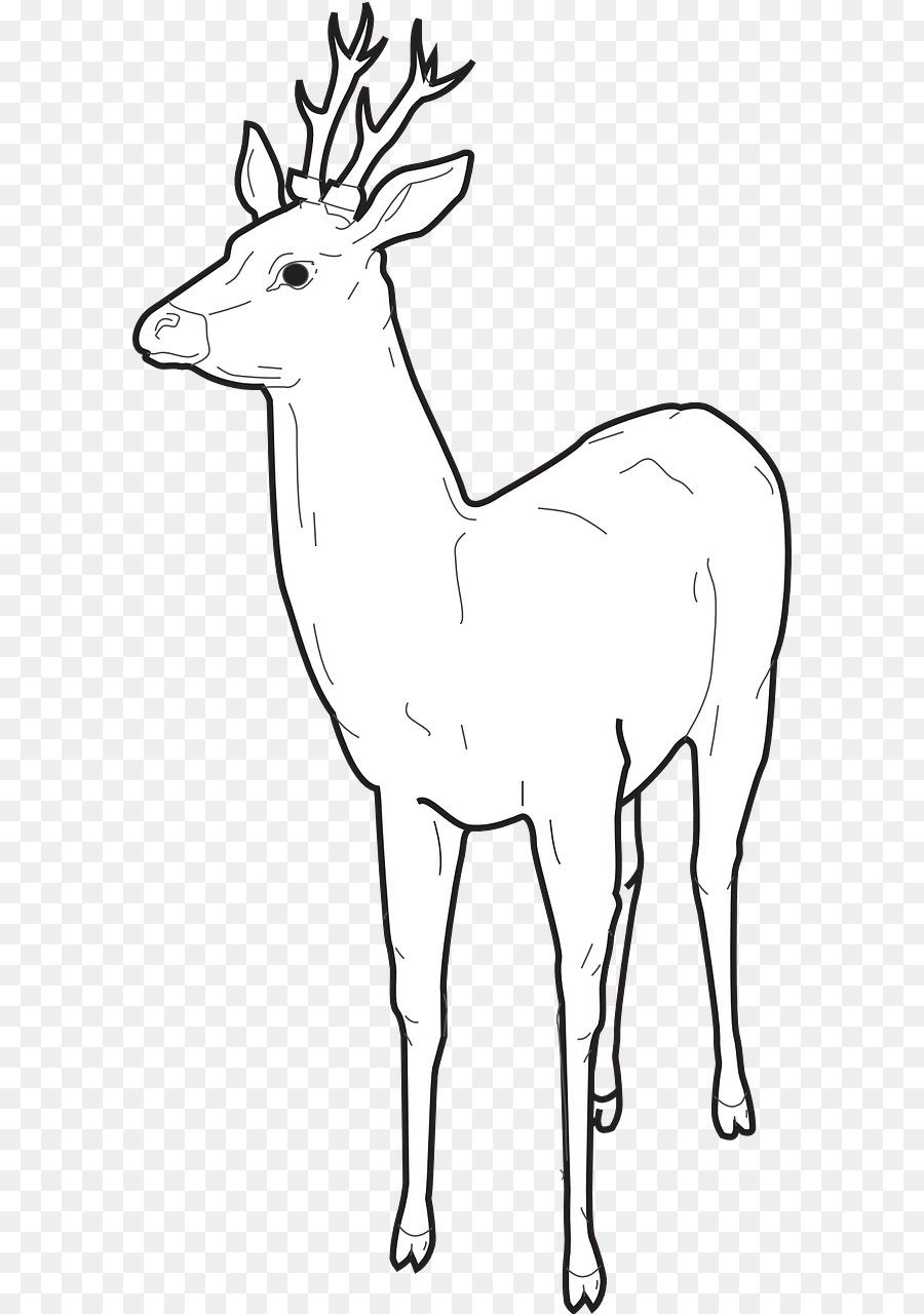 Elk Renos libro para Colorear, Dibujo de - los ciervos png dibujo ...
