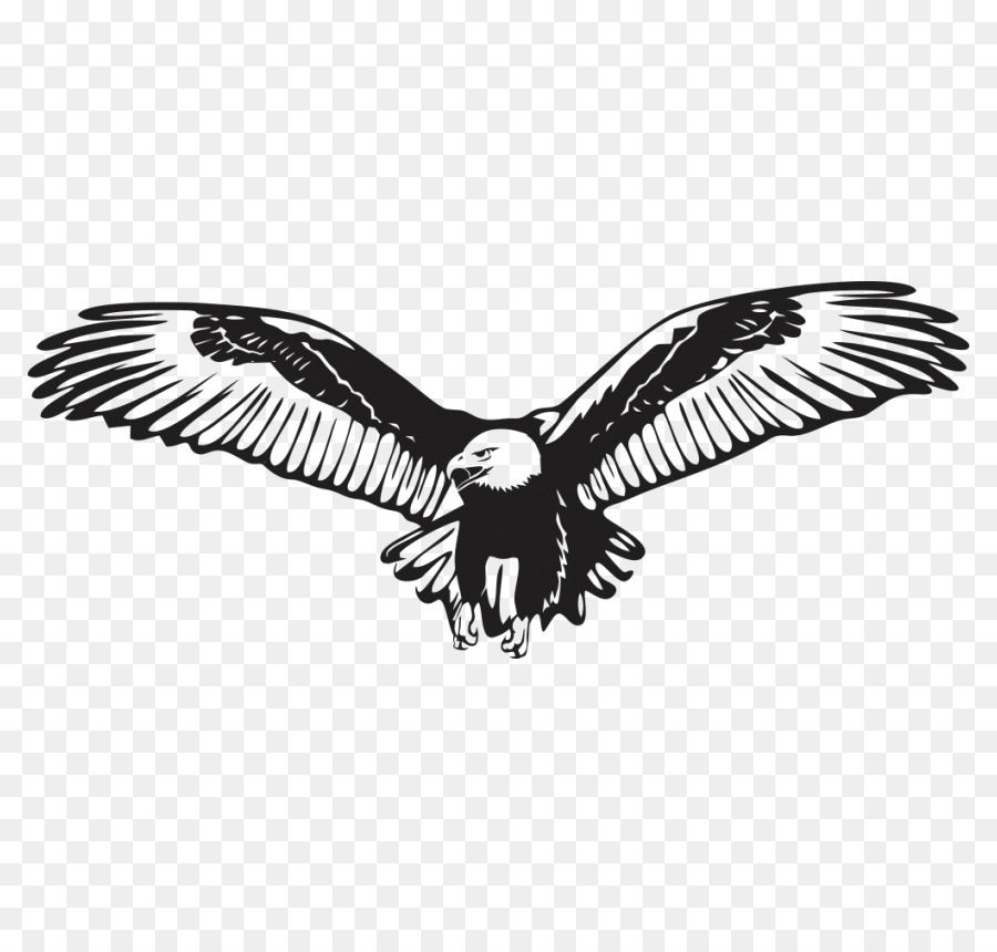 bald eagle wall decal sticker - eagle png download - 850*850 - free