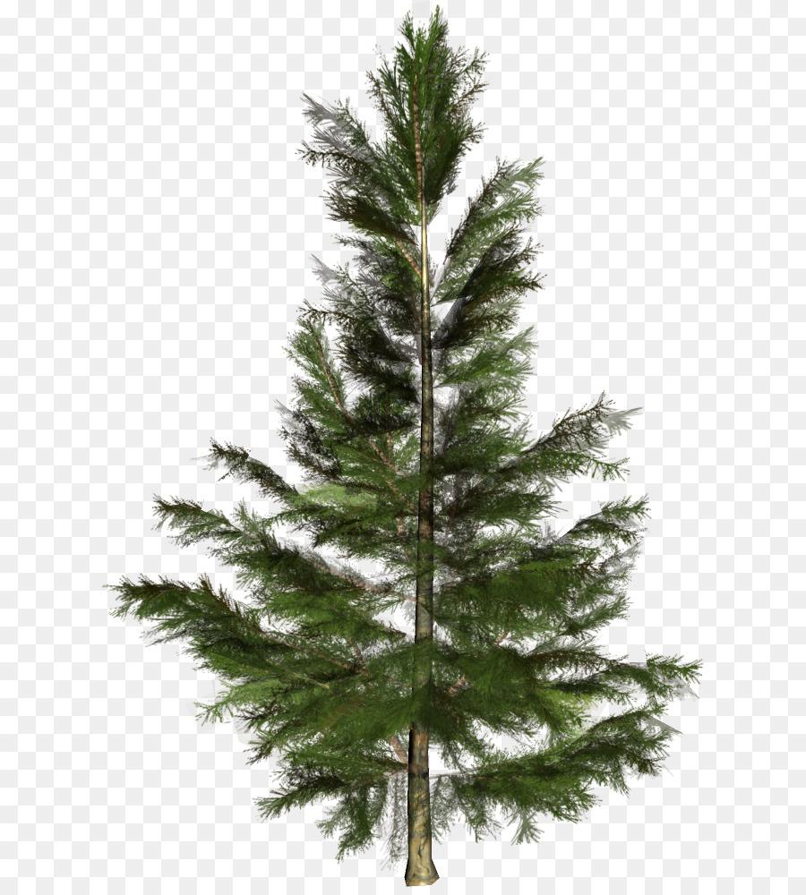 Spruce Christmas tree Conifers Nordmann fir - christmas tree png ...