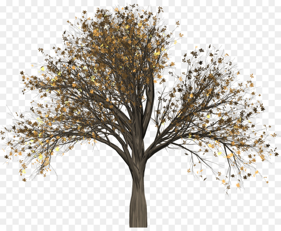 Twig Clip Art Tree Portable Network Graphics Elm Tree Png Download