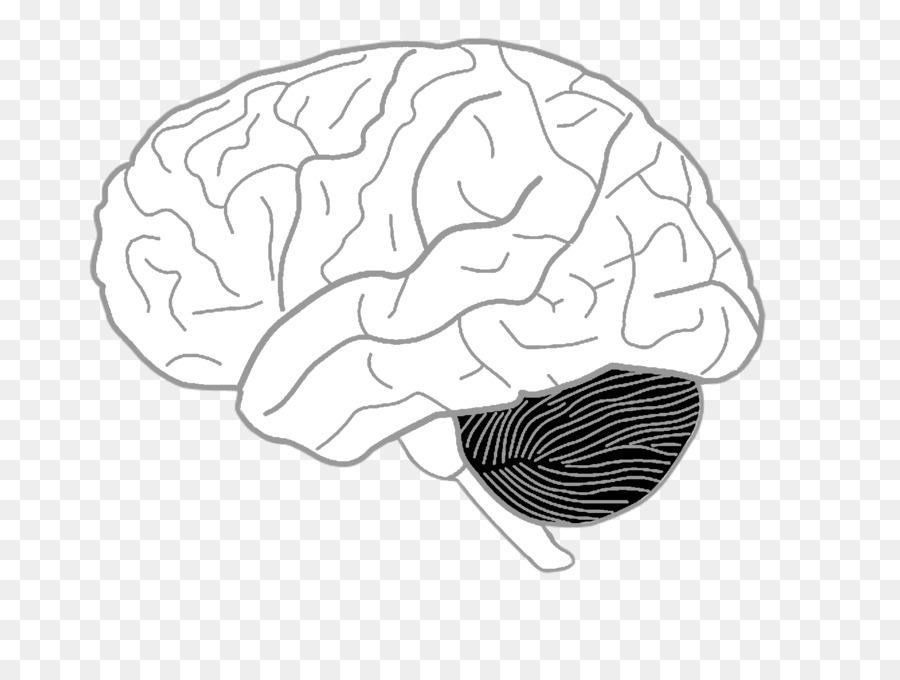 Drawing on the Right Side of the Brain Coloring book Human brain ...