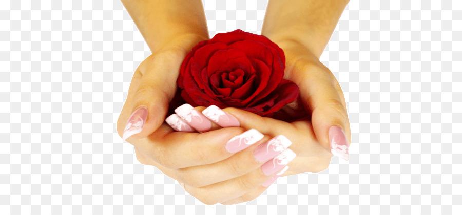 Rose Wallpaper Desktop Bunga Kuku Tangan Naik Unduh Tangan Kuku
