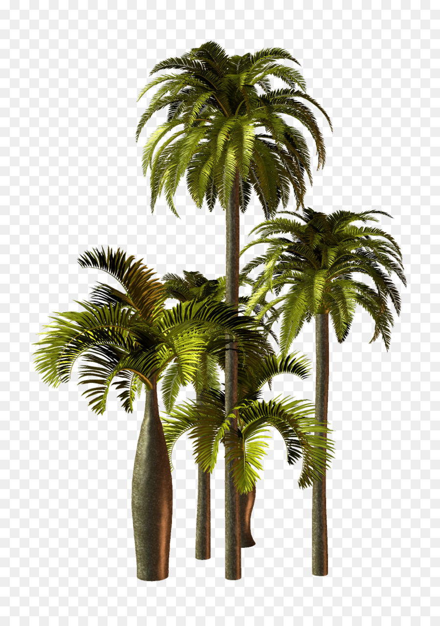 Asiatische Palmyra Palme Palmen Blumentopf Pflanzen Pflanzen Png