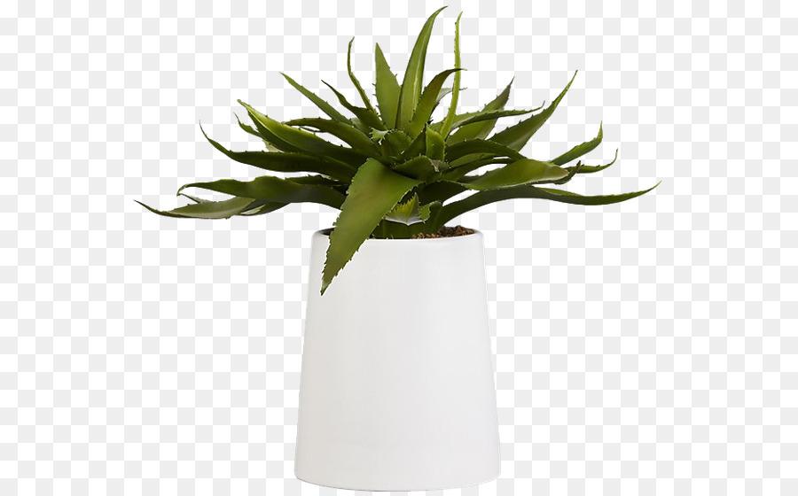 Aloe Vera Sukkulente Zimmerpflanze Zimmerpflanzen Pflanzen Png