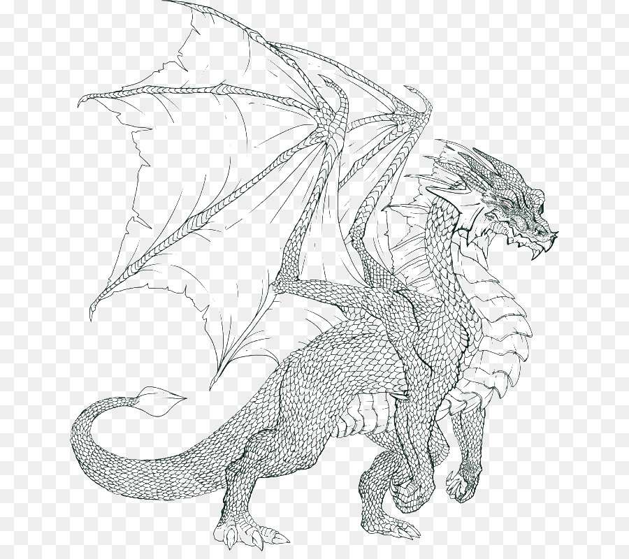 Coloring Book Dragon Colouring Pages Child Adult
